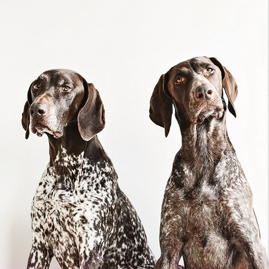 Dogs-of-Instagram1-Featured
