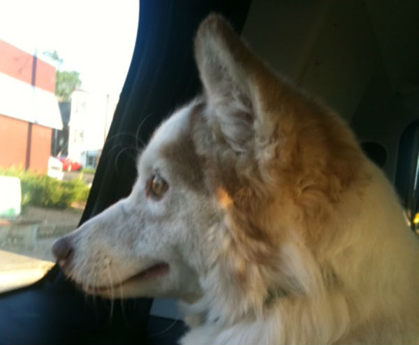 Lola when we got her