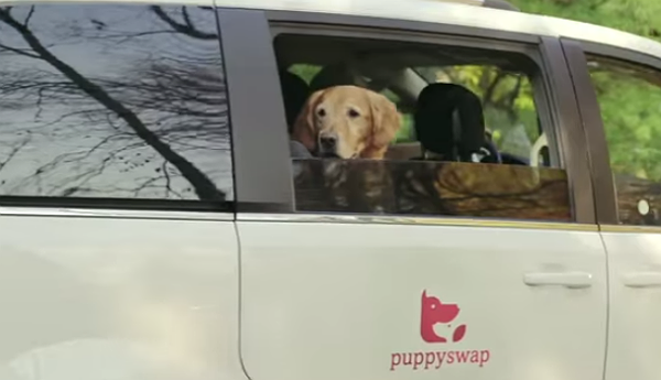 PuppySwap3