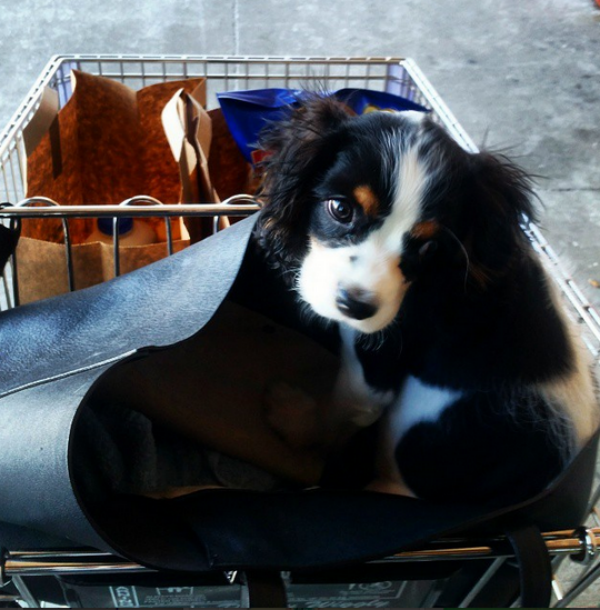 chance in cart