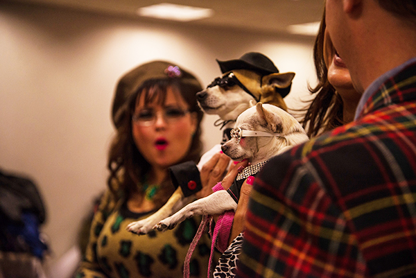 Doggies and Tiaras Pageant. Image by Cheyenne Cohen