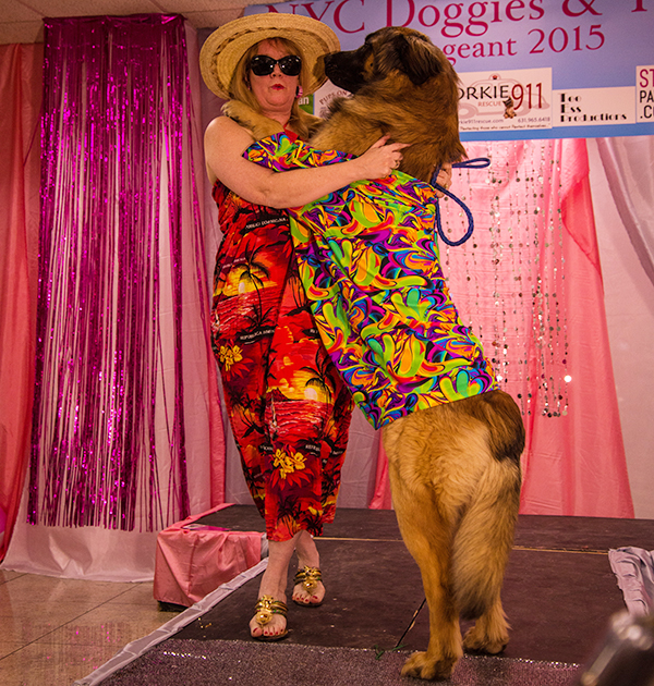 Hollywood showing off his dance moves at the Doggies and Tiaras event. Image by Cheyenne Cohen.