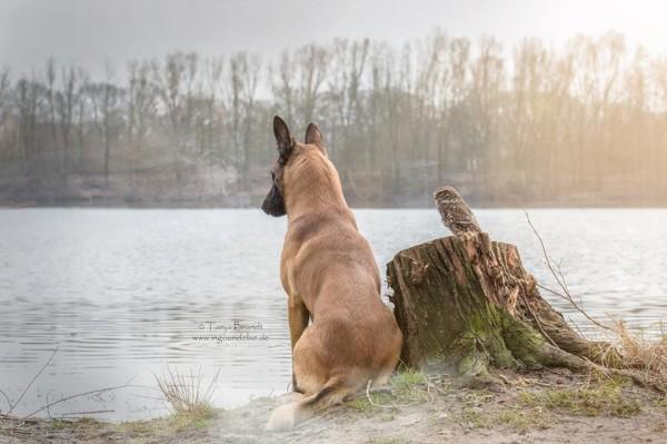owl and german shepherd