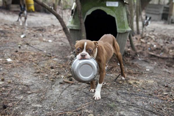 ASPCA Raid Alabama 3 - Copy