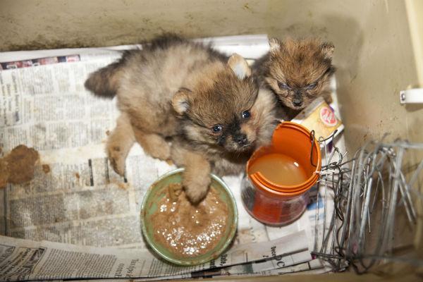 ASPCA Raid Alabama 5 - Copy