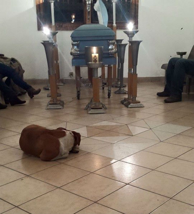 dogs at funeral2