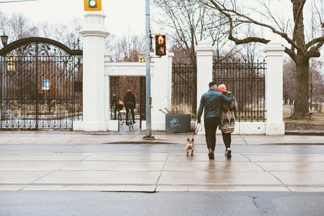 City Dog Living Relationship1