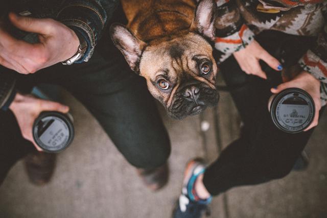 City Dog Living Relationship4