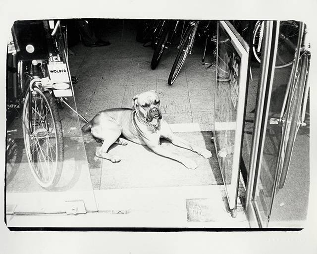 Dog in Bicycle Store 1982. Starting bid $1,800. Christie's Image LTD. 2015