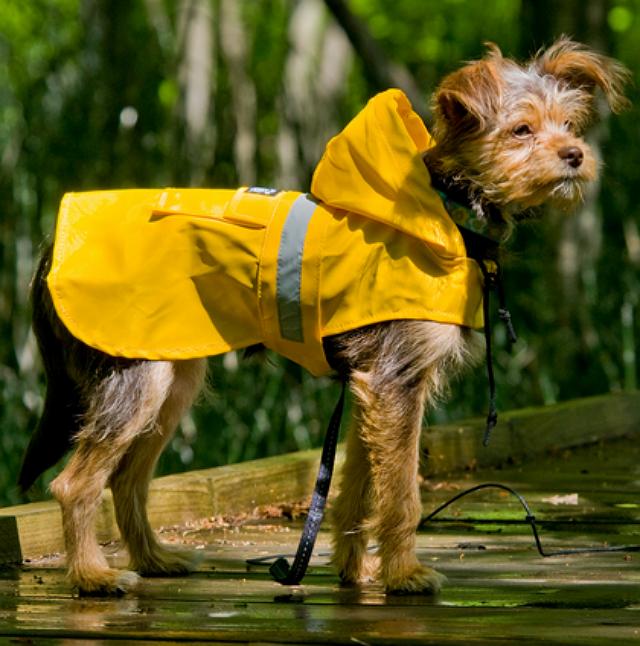 Seattle Slicker Reflective Dog Raincoat DrsFosterSmith