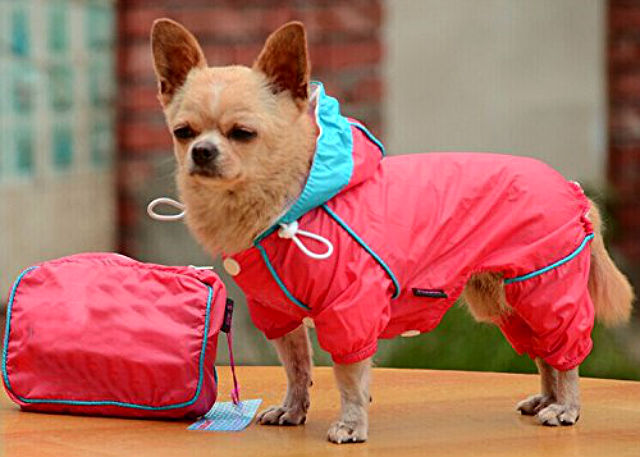 official store huge range of hot-selling fashion The 9 Must-Have Items for Your Pup to Combat the Rainy Weather