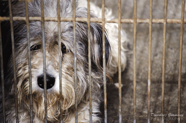 The Top 100 Worst Puppy Mills Revealed This Dog S Life