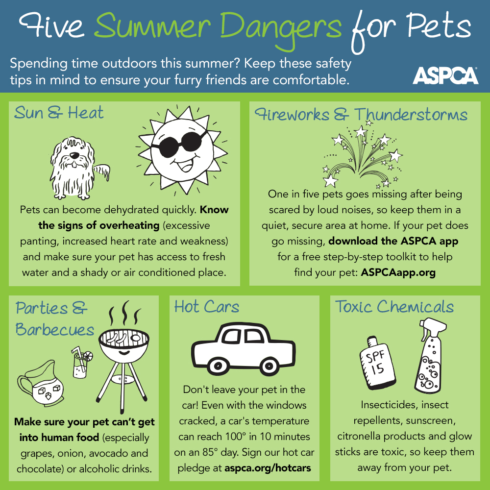 Hamden Dentist Goes Viral With Millions Of Video Views In: 5 Ways To Keep Your Dog Safe During The Summer (Infographic