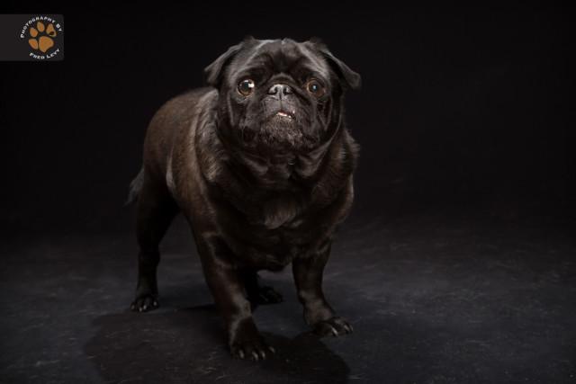 black dog5