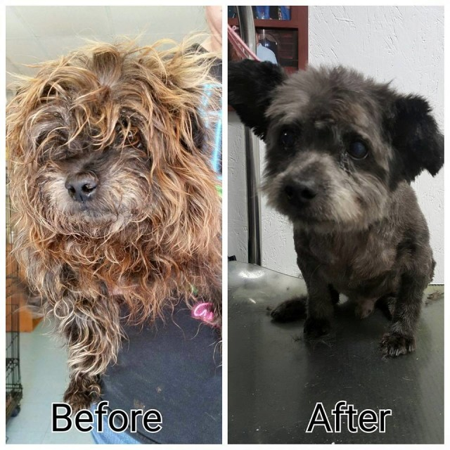chester before and after