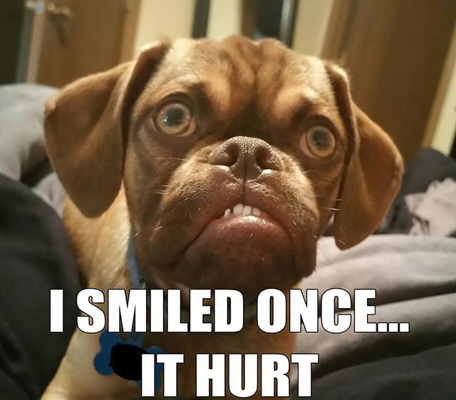 Grumpy Dog meme