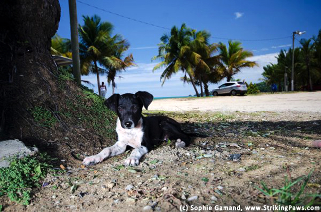 The Sato Project and Dead Dog Beach in Puerto Rico