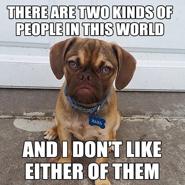 the 10 best memes of grumpy dog   this dog s life   dog