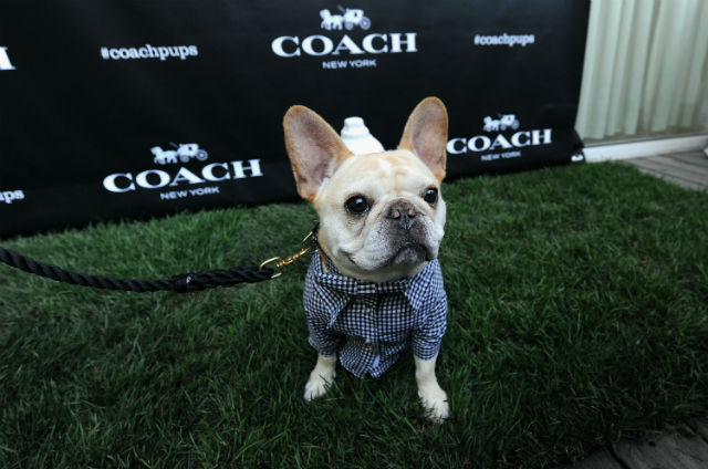 The dapper Walter Cronkite modeling on the green carpet.