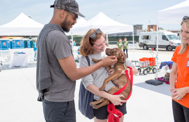 Best Friends Animal Society Is Coming To New York City