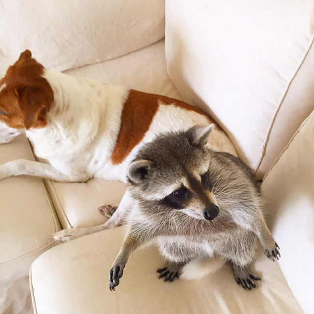 Watching over each other. Image via Instagram.