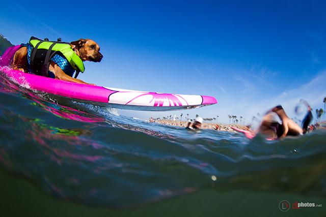 SurfCitySurfDog2015-101 resized