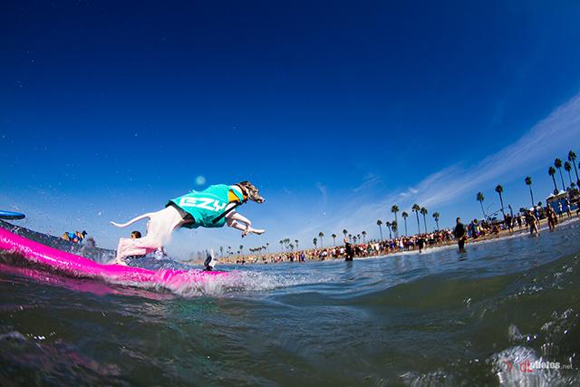 SurfCitySurfDog2015-121 resized