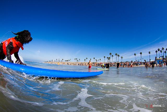 SurfCitySurfDog2015-216 resized