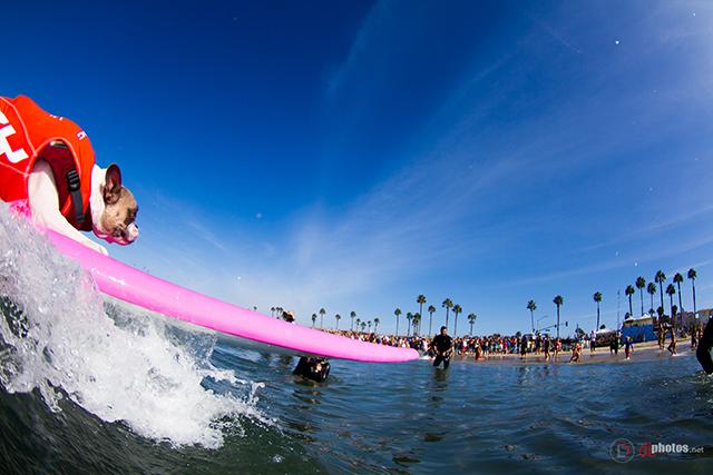 SurfCitySurfDog2015-45 resized