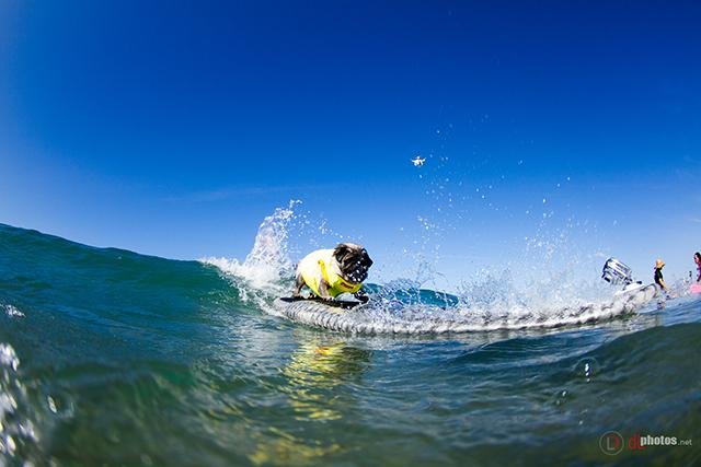 SurfCitySurfDog2015-60 resized