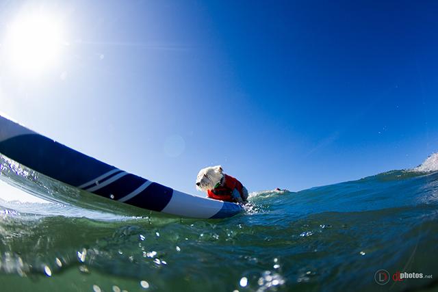 SurfCitySurfDog2015-81 resized