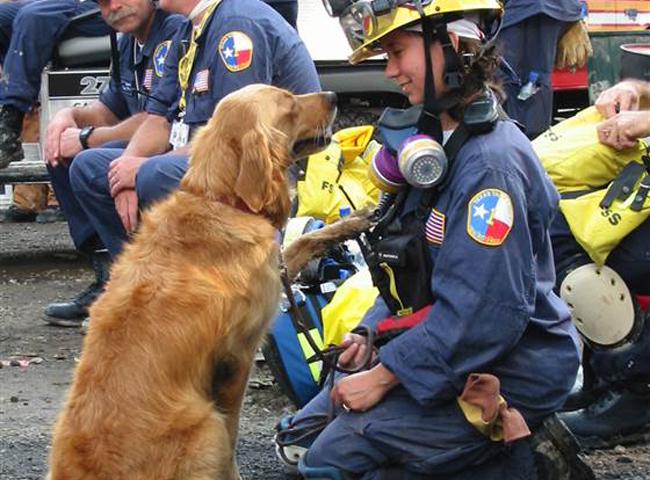 9/11 dog