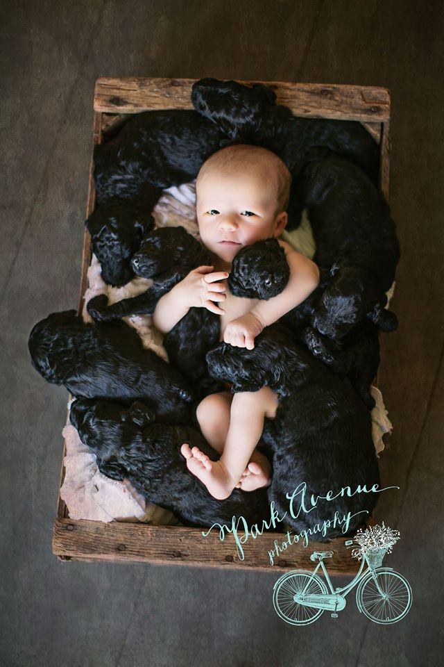 puppies and boy 2