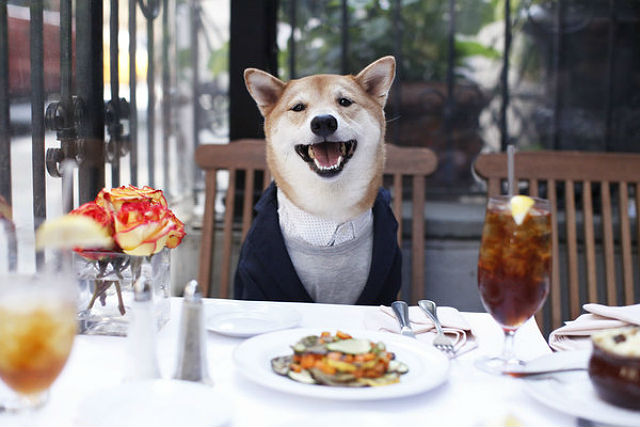 Menswear Dog in a Calvin Klein shirt and J.Crew tee