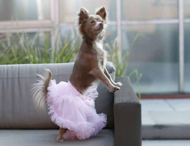 Zoey in a tutu from Baby Essentials