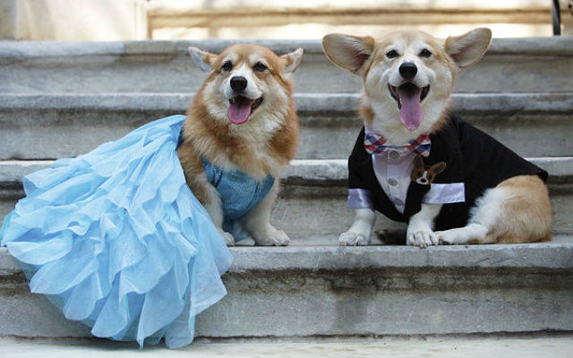 Hazel is a princess dress and Wally wearing a Bespoke suit
