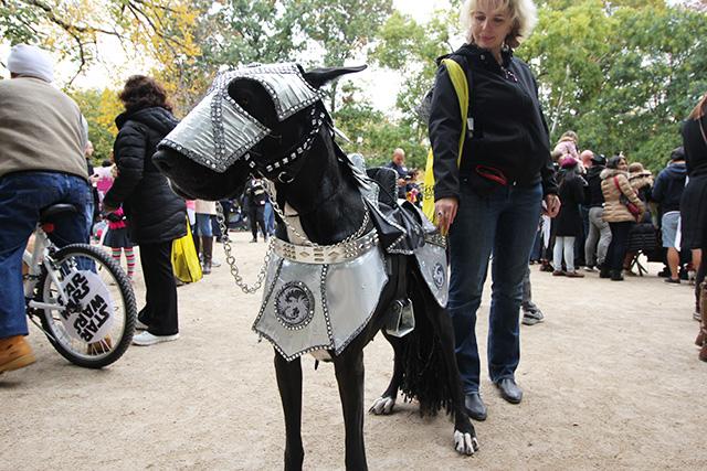 Knight dog. Image via Geoffrey Woodcock.