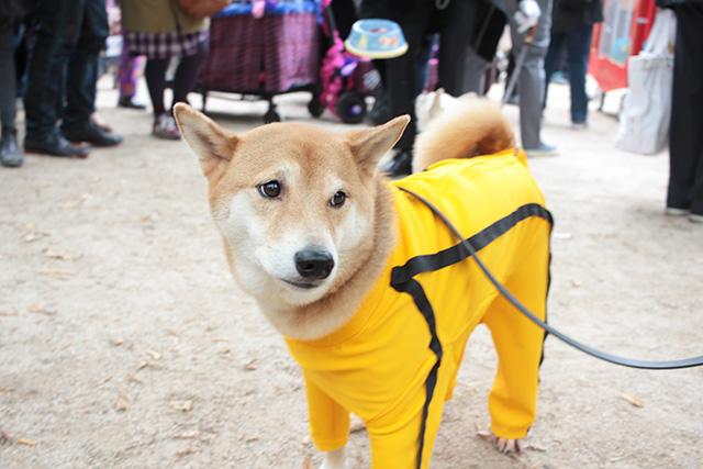 Menswear dog. Image credit: Geoffrey Woodock