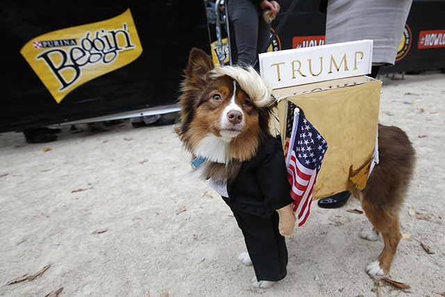 Donald Trump. Photo by Jason DeCrow/Invision for Purina Beggin'/AP Images
