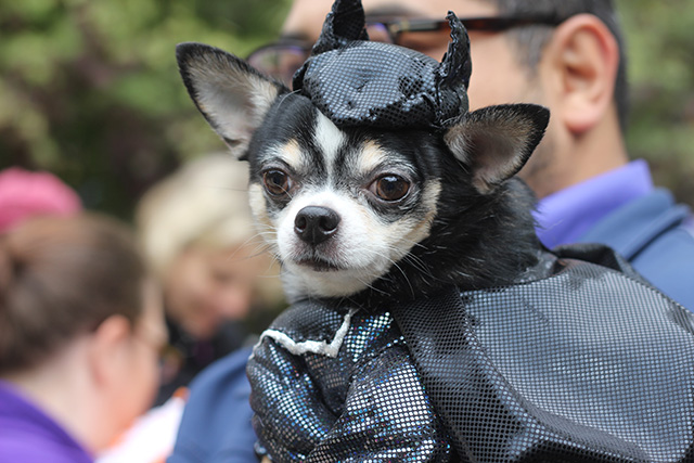 Bat dog. Image via Geoff Woodcock