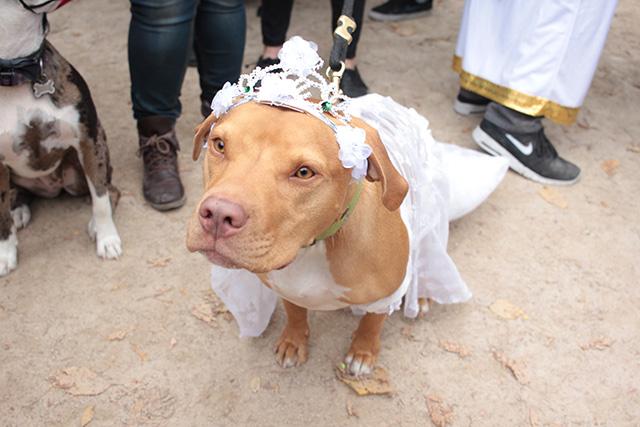 Bride. Image via Geoffrey Woodcock.