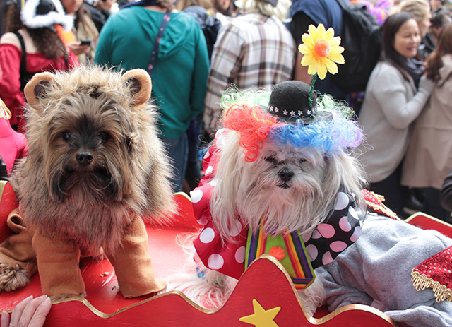 Circus dogs. Image via Geoffrey Woodcock.