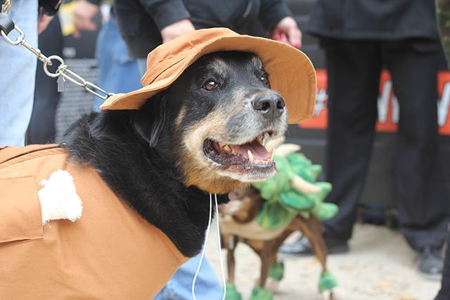 'Walking Dead' dog. Image via Geoffrey Woodcock.