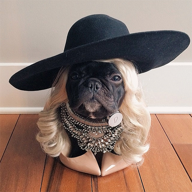 The u0027Transitionalu0027 costume & Here Are Our Top 13 Dog Costumes for Halloween u2013 This Dogu0027s Life ...