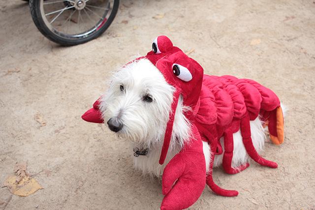 Lobster pup. Image via Geoffrey Woodcock.