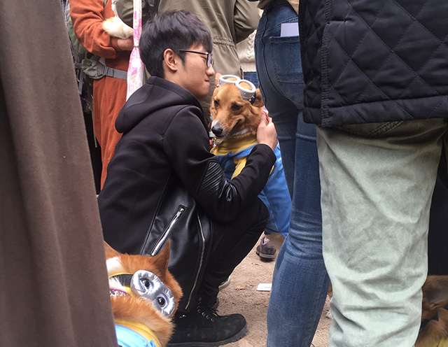 image via i_will_always_love_my_mom hugging a minion corgi in the middle of the chaos - Dallas Halloween Parade