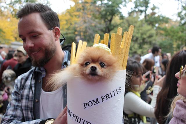 Pomeranian as pom frites. Image via Geoffrey Woodcock.