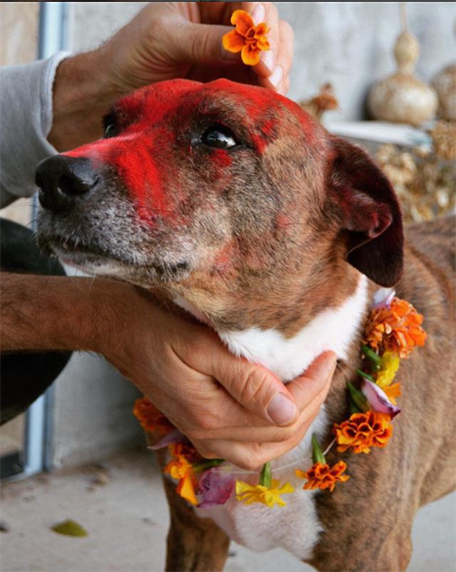 Beautiful Photos Of Pups Celebrated At Nepal S Amazing Dog
