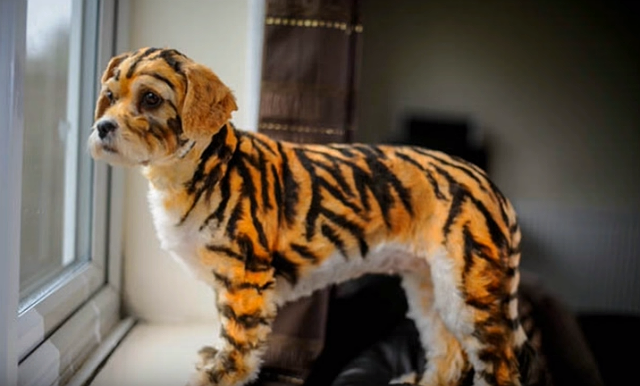 tiger dogs 4