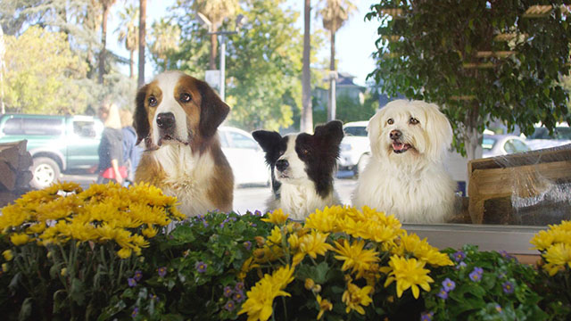 Doritos_Dogs_Main_Image